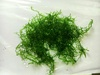 5g Mini Pelia Moss Live Aquarium Tropical Pond Plant